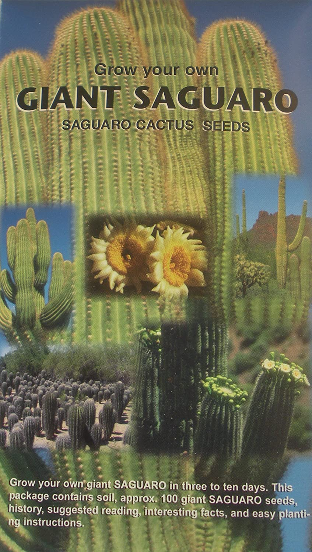 Amazon Com Grow Your Own Giant Saguaro Contains Aprox 100