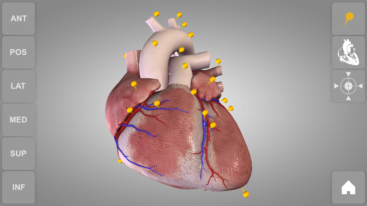 Amazon.com: Heart - 3D Atlas of Anatomy - Lite Version: Appstore for ...