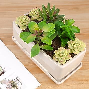 Pure Lifestyle Pot De Fleur En Ceramique Jardinage Plante Cactus 26