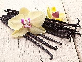 Seltene Vanille Planifolia Bean Rooted Pflanze/bereit, Indoor/Outdoor/One Plant zu wachsen