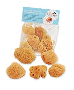 Hermit Crab Natural Sea Sponges - 5 Pack Unbleached, Provides Nutrients, Safer Drinking and Helps Maintain Habitat Tank Humidity by Constantia Pets