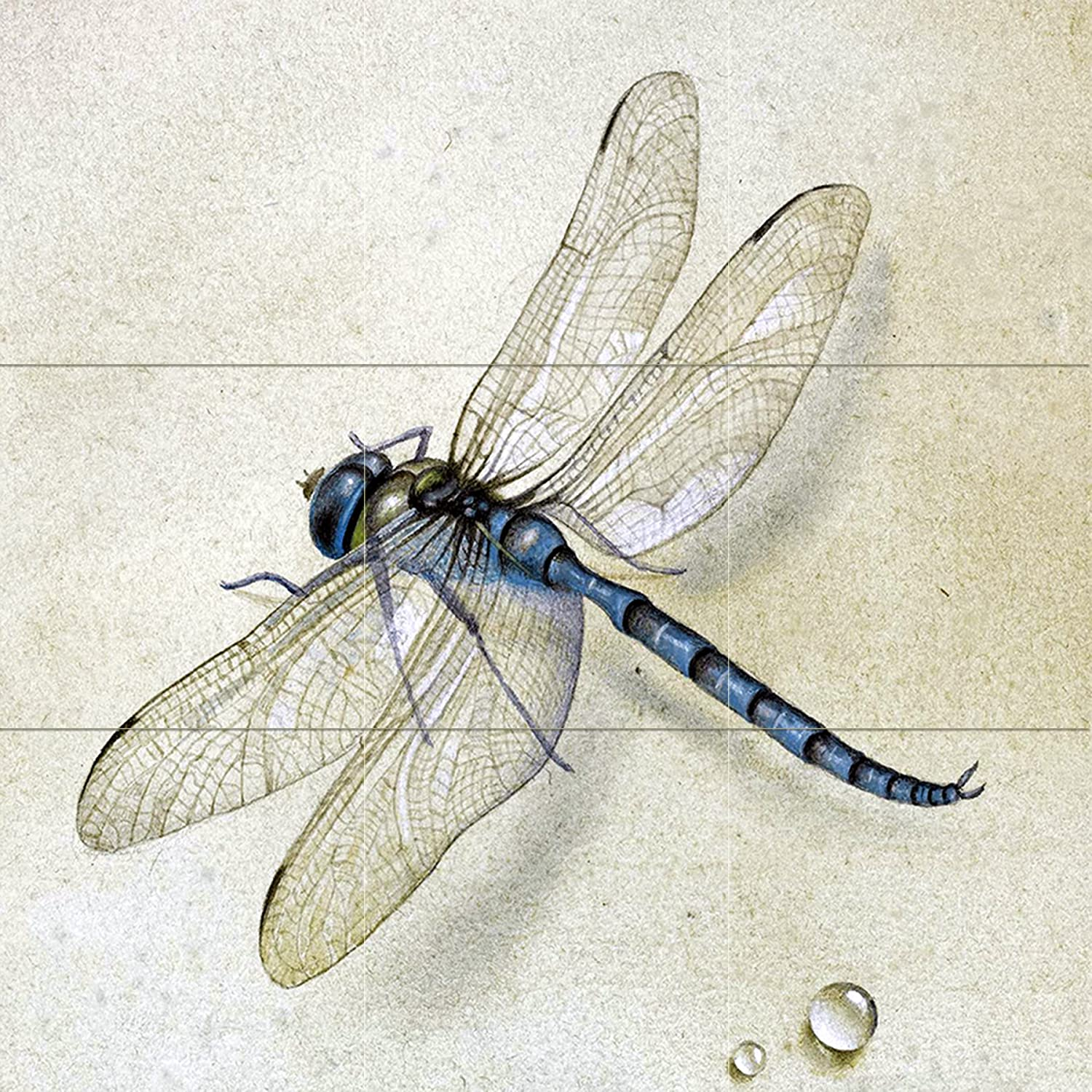 Dragonfly f tolstoy water drop dew tile mural kitchen for Dragonfly mural