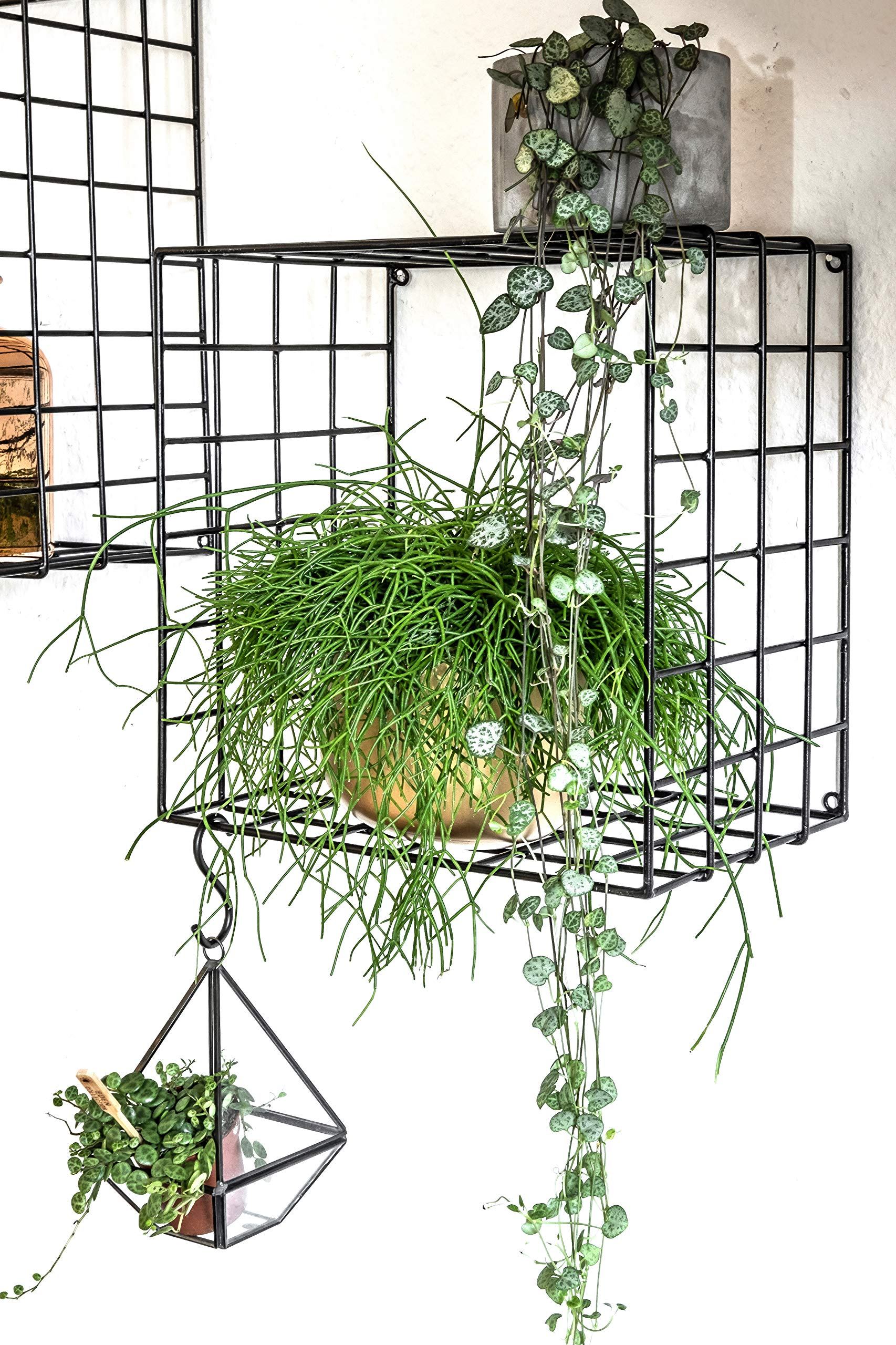 Kimisty Set of 3 Metal Floating Shelves | Decorative Wire Large Square Wall Mounted Shelf | Box Free Floating Mesh Shelves | Industrial Style Deep Black Metal Shelving | 14, 12, 11 Inch Long - FUNCTIONALITY AND STYLE: Kimisty ROOT floating shelf set is perfect way to display your plants, books, glassware and any other kind of shelf decor. Hang them linear or vertical or be playful and use them by hanging cross. No matter how you style them it will be a memorable decoration piece in your home and will collect many compliments. INDUSTRIAL TREND: Industrial interior trend is not leaving us soon. And we love how it adds modern touch to your space so easily and effortlessly. ROOT shelves are deep and large unlike other models out there. Dimensions are : Large: 14 x 14 X 7.5 inch Medium: 12.5 x 12.5 X 7.5 inch Small: 11 x 11 X 7.5 inch HIGH QUALITY MATERIALS AND CRAFTMANSHIP: Material quality means everything to us. We use heavy gauge iron with black powder coating. - wall-shelves, living-room-furniture, living-room - 91WnRqD%2Bn8L -