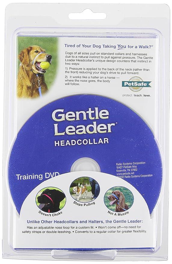 Amazon Petsafe Gentle Leader Head Collar With Training Dvd