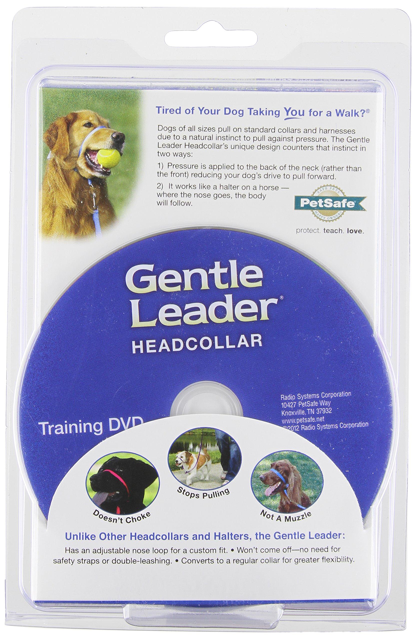 PetSafe Gentle Leader Head Collar with Training DVD, MEDIUM 25-60 LBS., DEEP PURPLE by PetSafe (Image #1)