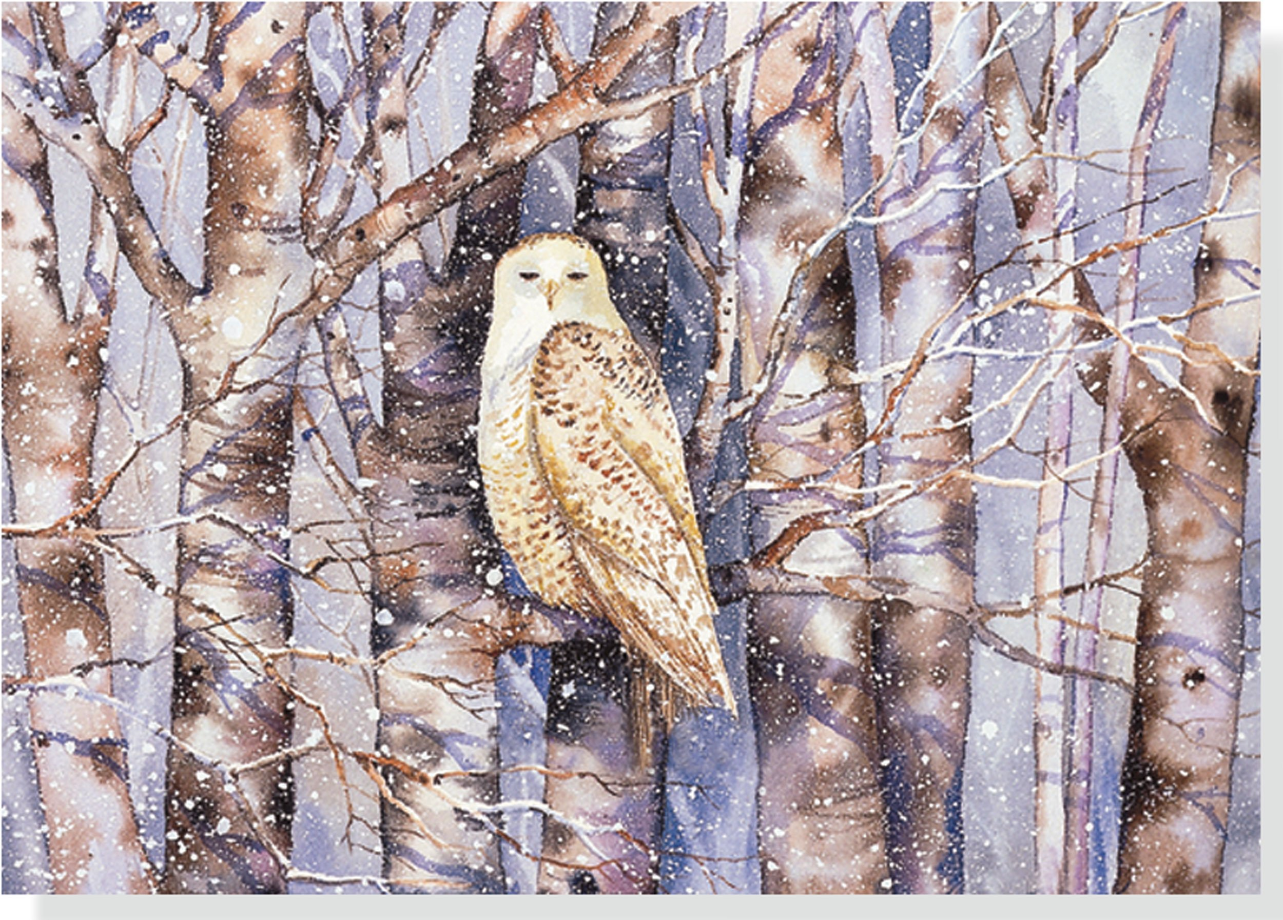 Snowy Owl Holiday Boxed Cards (Christmas Cards, Holiday Cards ...