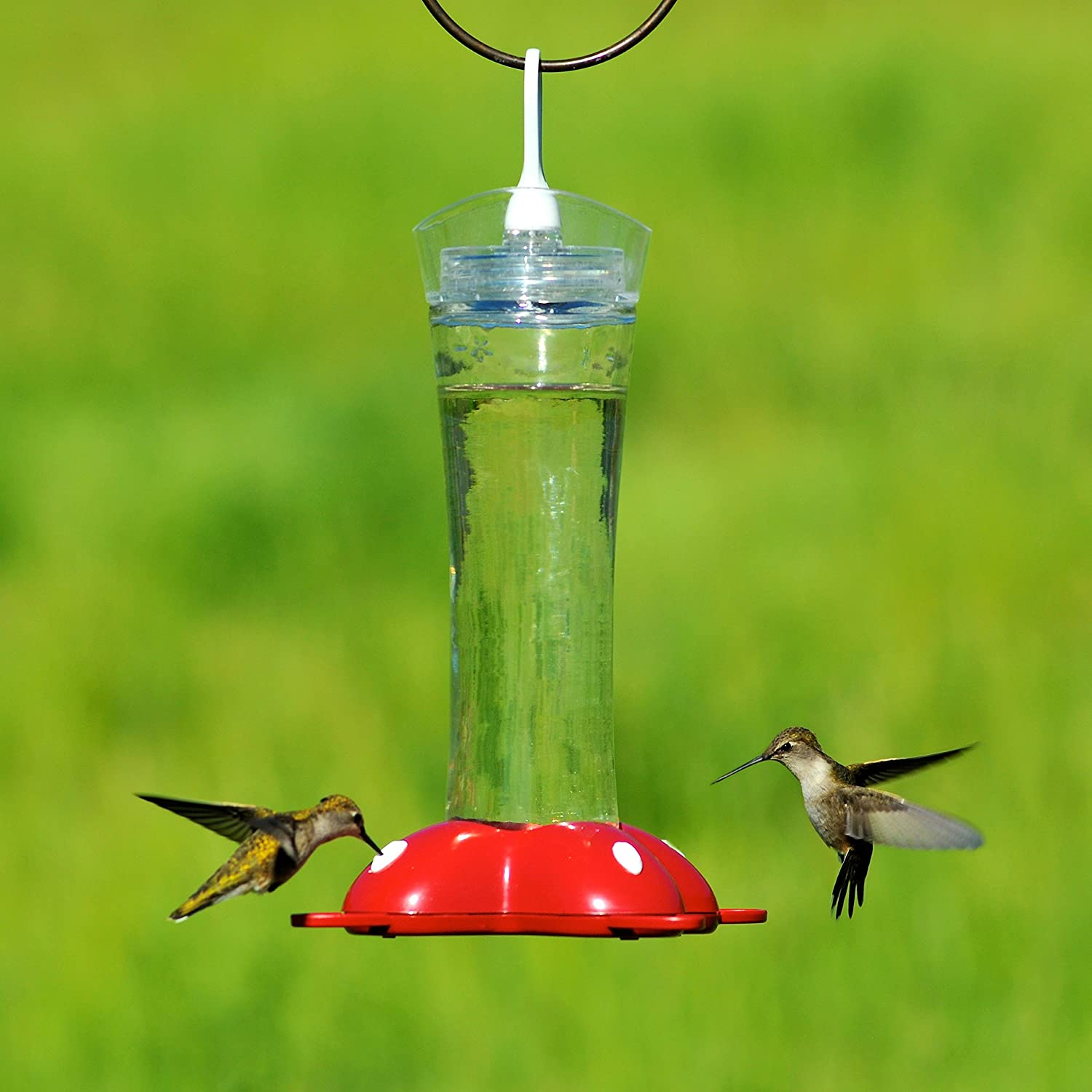 feeder hummzinger birdertown excel oz large hanging feeders collections hummingbird aspects