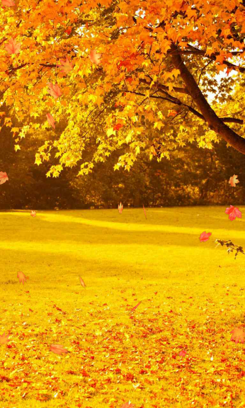 Amazon Com Autumn Wallpaper Appstore For Android
