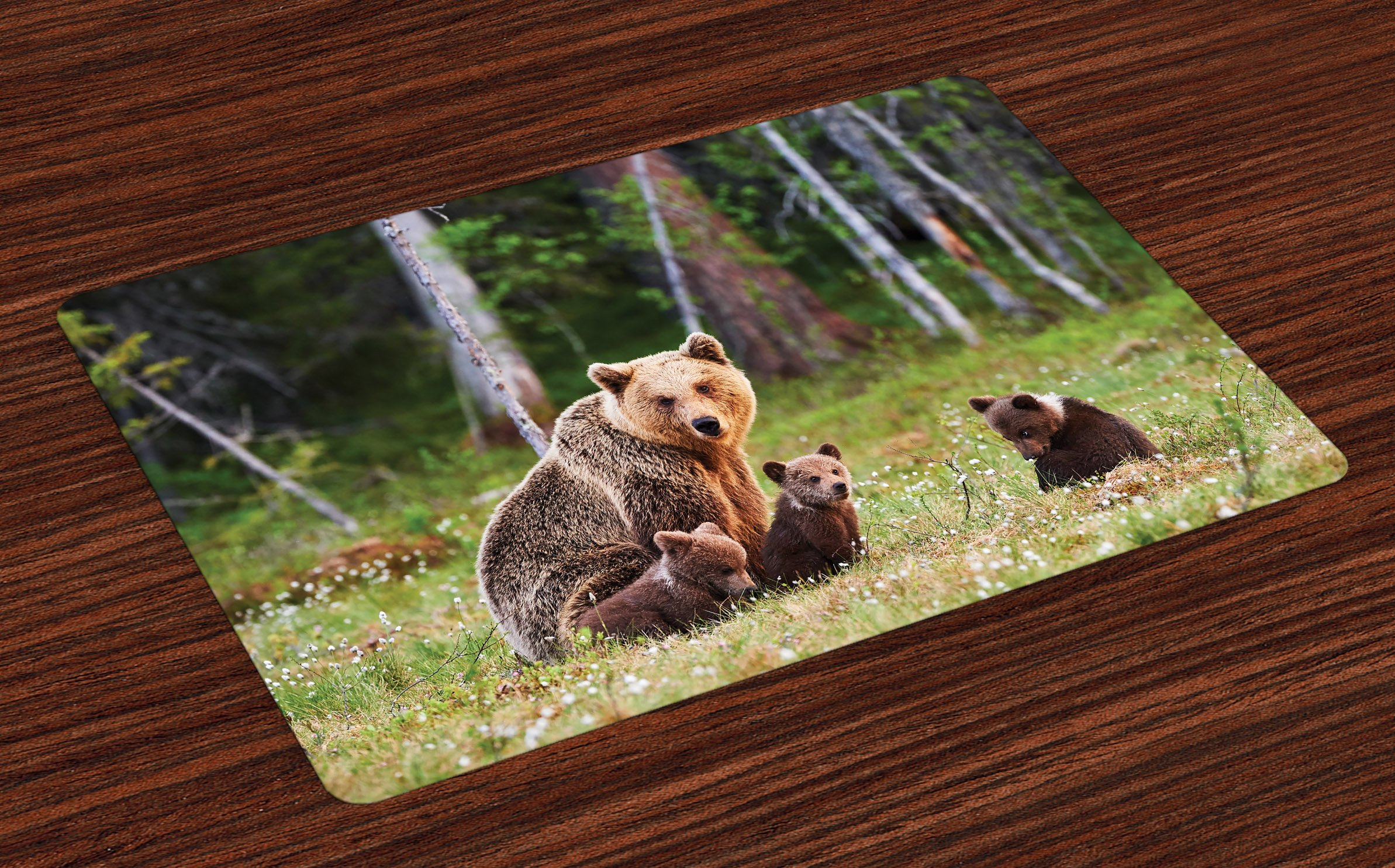 Lunarable Nature Place Mats Set of 4, Wild Mother Grizzly Bear Protecting Her Babies in Forest Jungle Animal Print, Washable Fabric Placemats for Dining Room Kitchen Table Decoration, Green and Brown