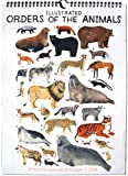 High Note 2018 Illustrated Orders of the Animals 18-Month Designer Wall Calendar (CHG0297)