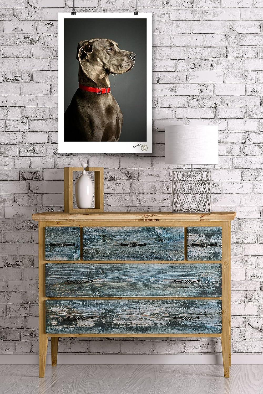 24x36 SIGNED Print Master Art Print - Wall Decor Poster Stoic Dog 85091