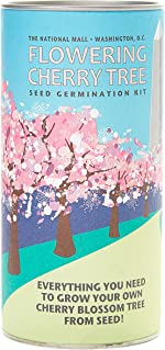 Washington Cherry   Tree Seed Grow Kit   The Jonsteen Company