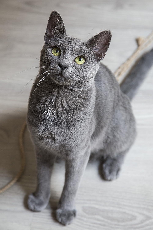 Amazon Com Grey Cat With Green Eyes Milada V Home Kitchen