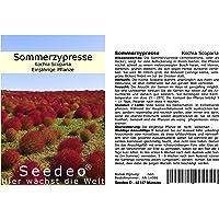 Seedeo - Ciprés de verano (Kochia Scoparia), 200semillas