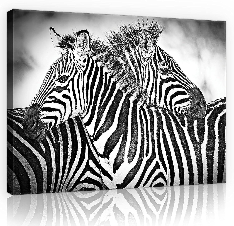 welt-der-träumewandbild canvasbild lienzo impresión lienzo | Zebra Blanco y Negro | | lienzo 10159_ pp-ms | naturaleza salvaje vida salvaje Animal Animales Cebra Cebras, O1 (100cm. x 75cm.)