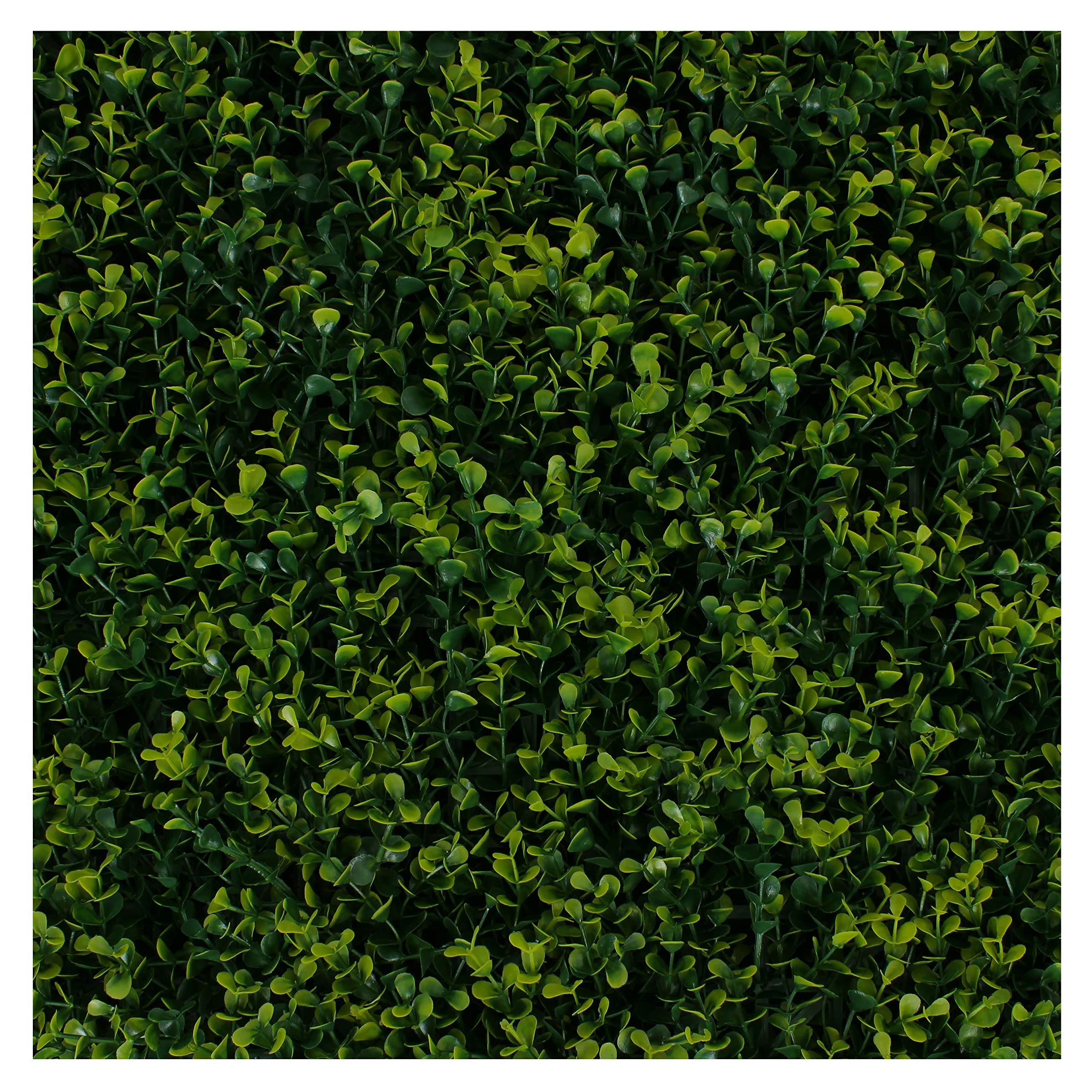 Milltown Merchants Artificial Hedge - Outdoor Artificial Plant - Great Boxwood and Ivy Substitute - Sound Diffuser Privacy Fence Hedge - Topiary Greenery Panels (2, Golden Boxwood)