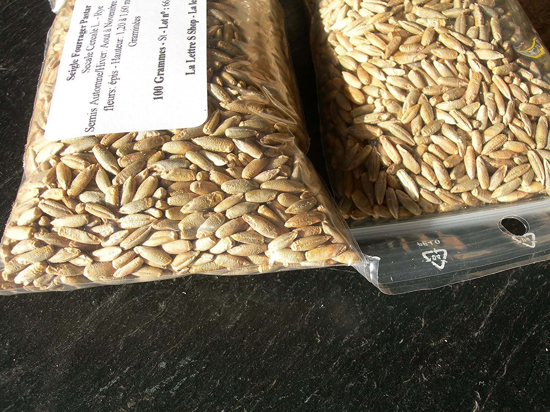 Secale Cereale L 500 grammes Seigle Fourrager Protector - Rye - Engrais Vert - Green Manure - SEM02