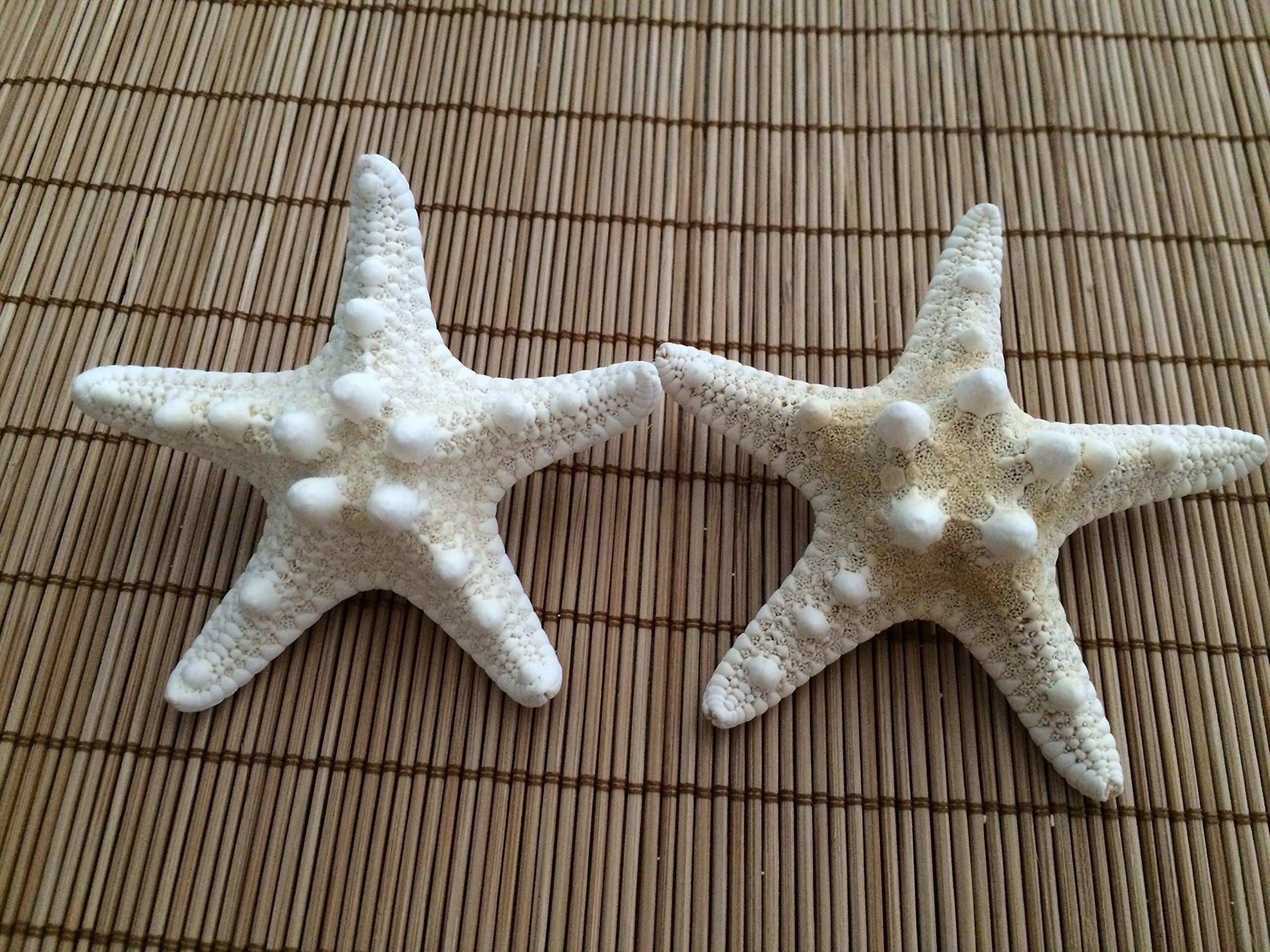 Men's Knobby Starfish Beach Wedding Boutonnieres, 5