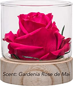 Home Scent 12oz Real Fragrance Flower Lasts 4 Months Soothing Aromatherapy of a Natural Scent Flow Birthday Gifts for Women Unique Gifts. Room Decor (Fuchsia/Fragrance Gardenia Rose de Mai)
