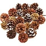 24 Pack Natural Pine Cones For Christmas Fall Thanksgiving Harvest Autumn Party Craft Accessory Decorations, 4 Winter Holiday Colors Red White Gold and Brown By Gift Boutique