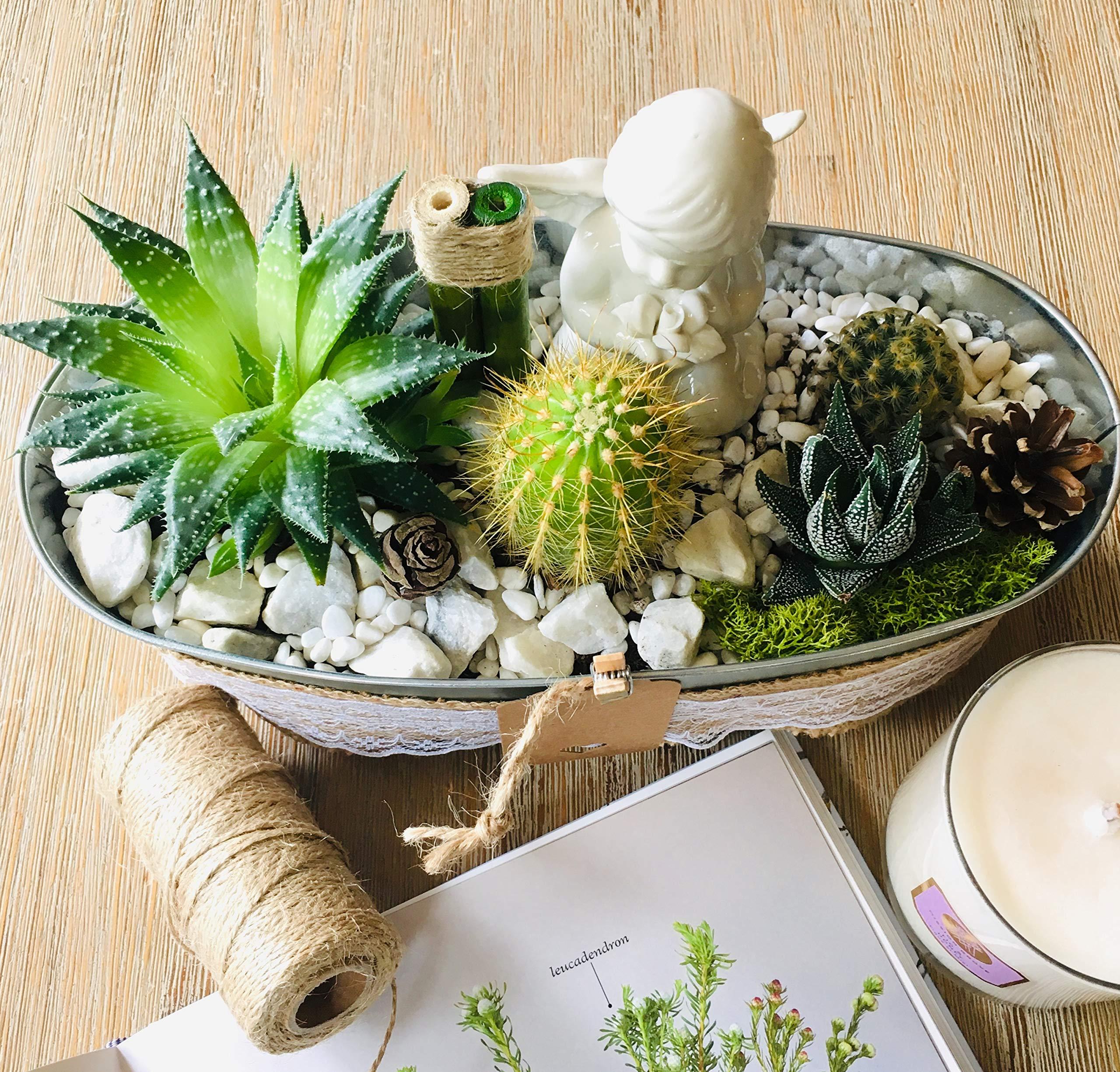 Live Succulent Angel's Garden Arrangement: 1 x 4'' Succulent, 3 x 2'' Succulents/Cacti, Free Gift!!! by Succulent Design Studio (Image #3)
