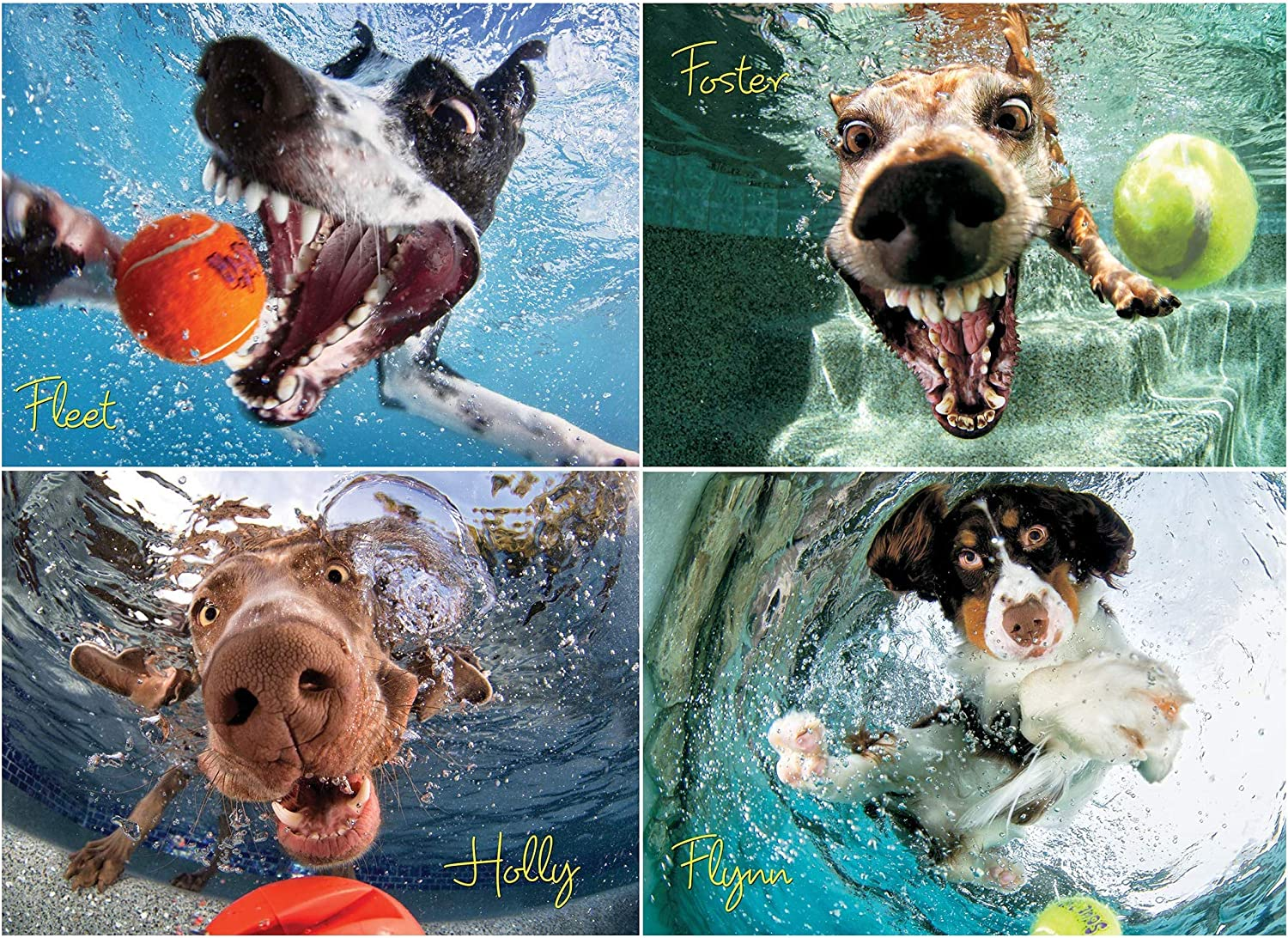 Willow Creek Press - 1000 Piece Puzzle for Adults - Underwater Dogs Jigsaw Puzzles Photo's Play Ball