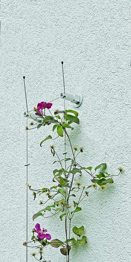 Rank Sistema GreenCable® Set 01 para plantas trepadoras con ...