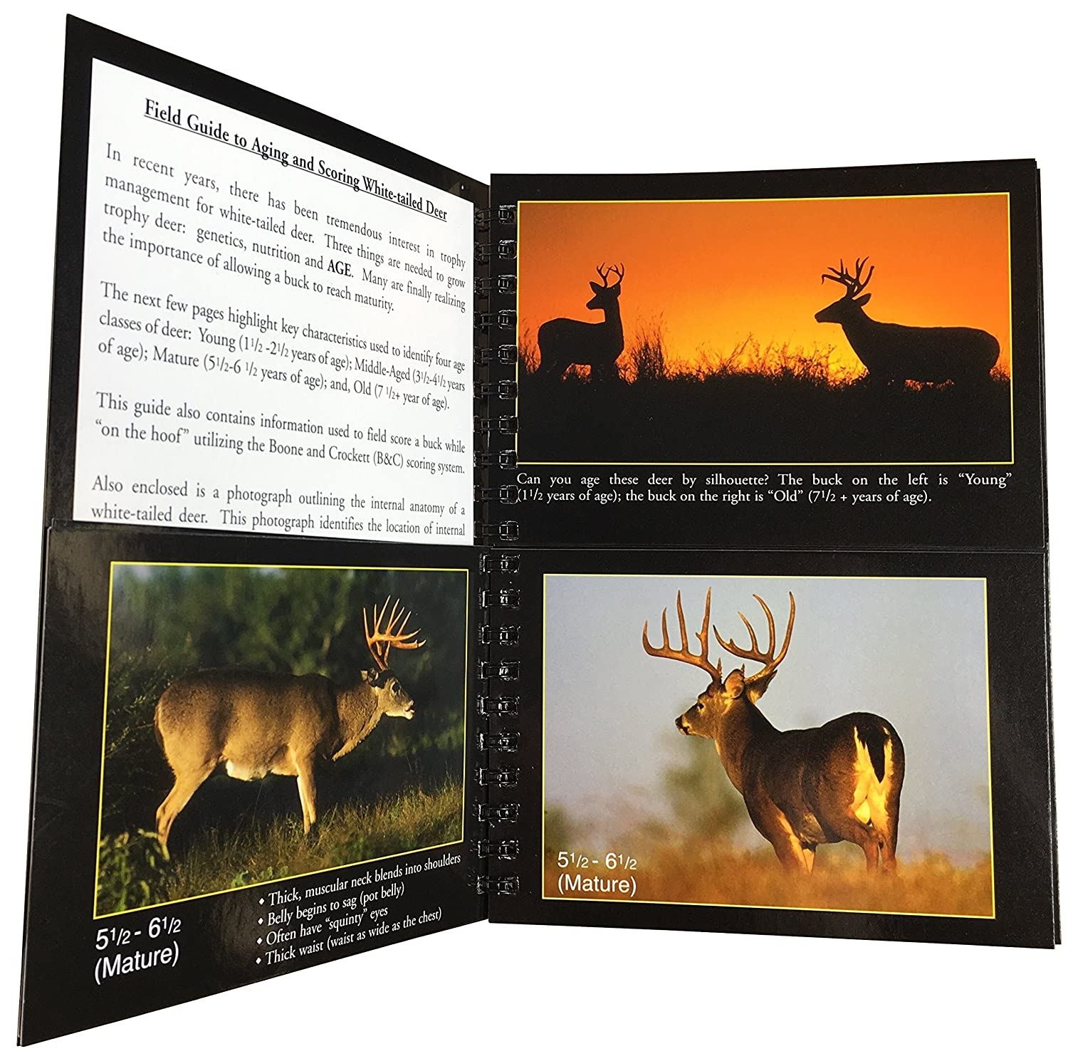 Amazon Cajun Archery Cajun Guide To Aging Scoring Whitetail
