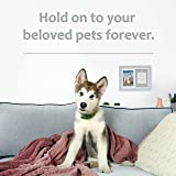 Better World Pets Paw Prints Keepsake Photo Frame