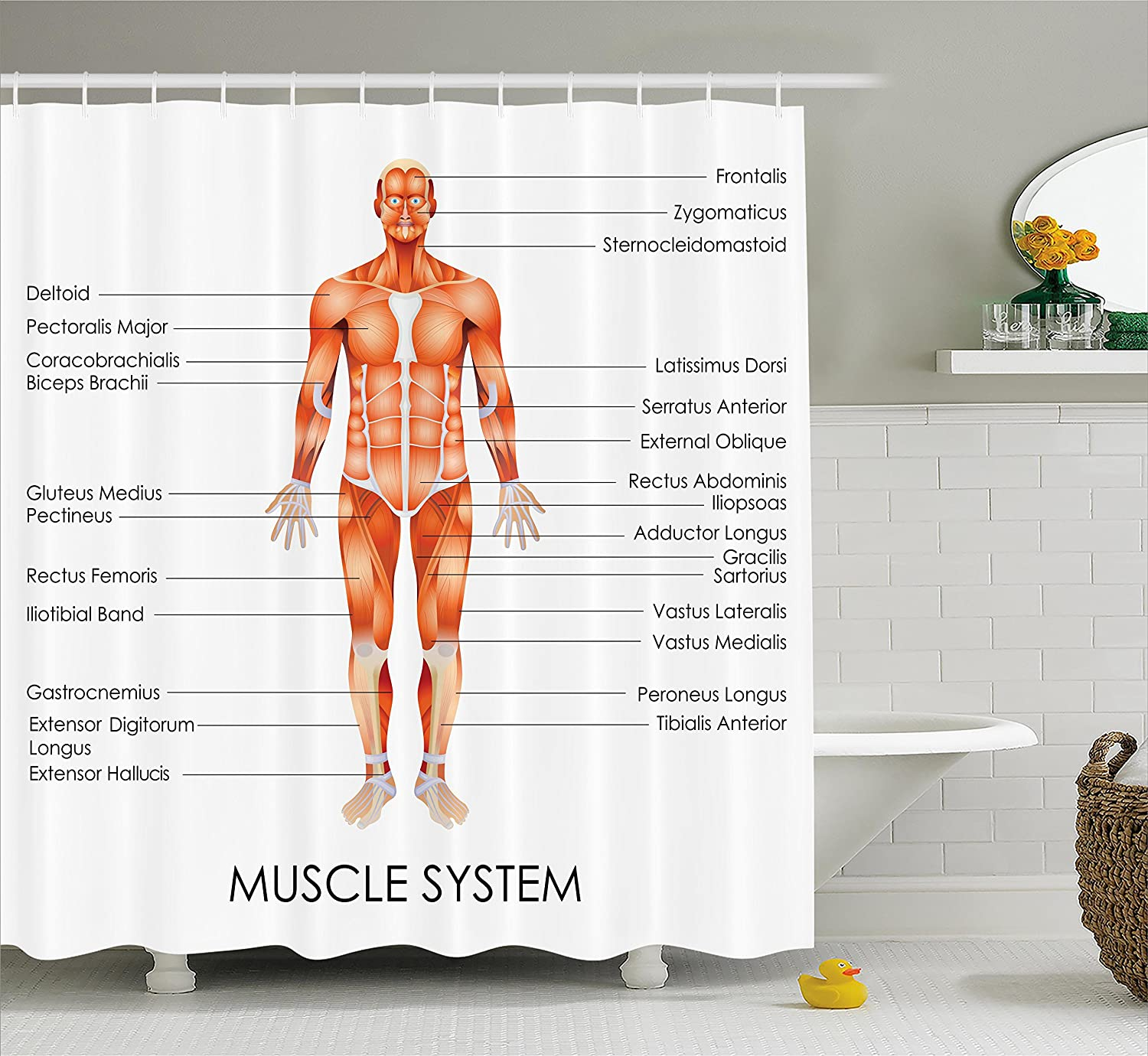 Amazon Ambesonne Human Anatomy Shower Curtain Muscle System