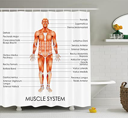 Ambesonne Human Anatomy Shower Curtain Muscle System Diagram Of Man Body Features Biological Elements Medical