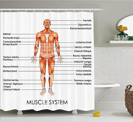 Anatomía Humana cortina de ducha por Ambesonne, sistema muscular ...