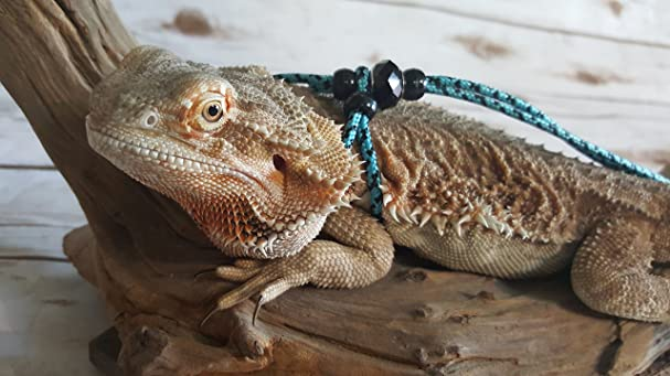 Amazon Adjustable Reptile LeashTM Green Harness Great For Reptiles Or Small Pets