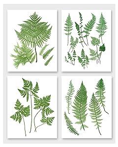 5x7 Fern Wall Art (Botanical Prints, Set of 4, Woodland Home Decor) – Unframed