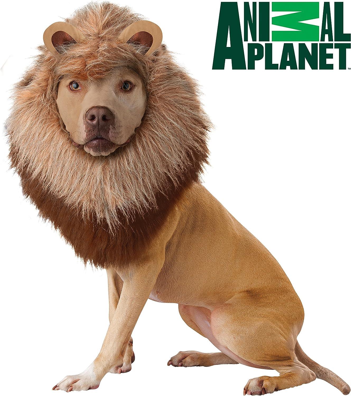 Disfraz de Perro de león de Planeta Animal, tamaño Mediano: Amazon ...