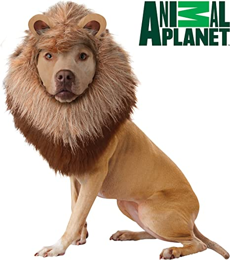 Animal Planet Disfraz de león para Perro, Grande: Amazon.es ...