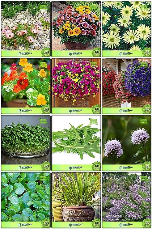 Creative Farmer Terrace Garden Combo Herb Seeds Flower Seeds