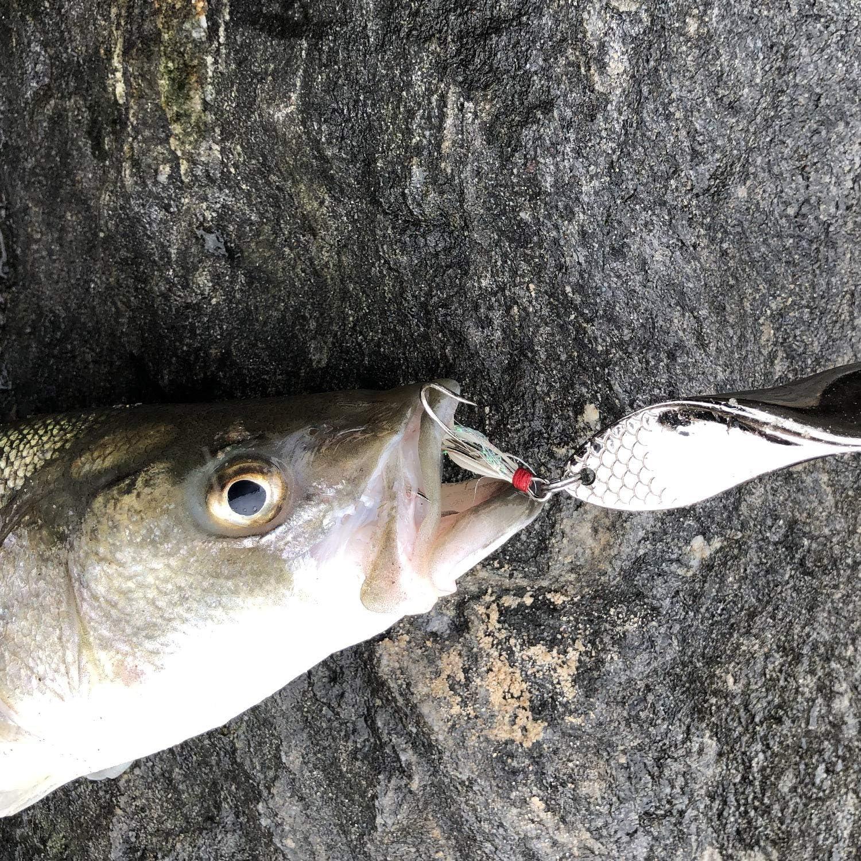 Fishing Lures Trout Set of 2 Treble Hooks Bass Metal Fishing Lure Silver//Gold 1oz 28gm Propeller Shape