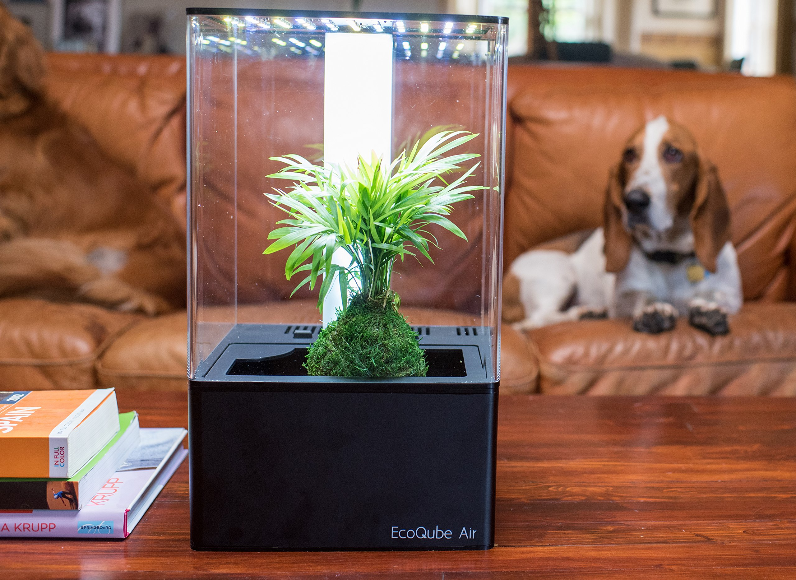 EcoQube Air - Decorative Hydroponics Indoor Herb Home Garden Kit with LED Grow Light, Basil Seeds and True Hepa-Type Filter Air Purifier by EcoQube (Image #8)