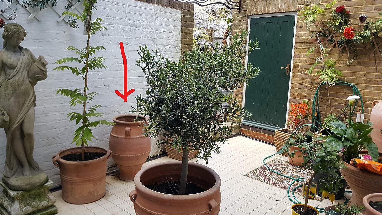 Amazon.com: Cretan Pithari handmade terracotta pot 70cmx45cm ...