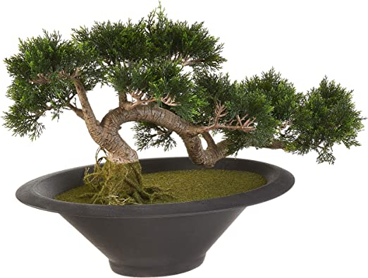 Amazon Com Silk Decor Cedar Ceder Bonsai Tree Green Home Kitchen