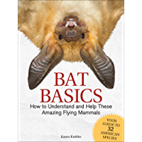 Bat Basics: How to Understand and Help These Amazing Flying Mammals