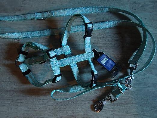 collier pour chien anione