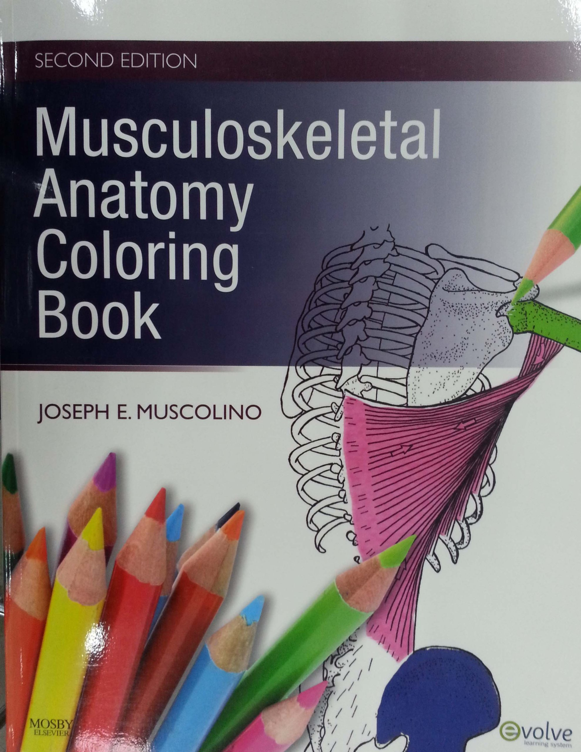 Musculoskeletal Anatomy Coloring Book, 2e: Amazon.co.uk: Joseph E ...