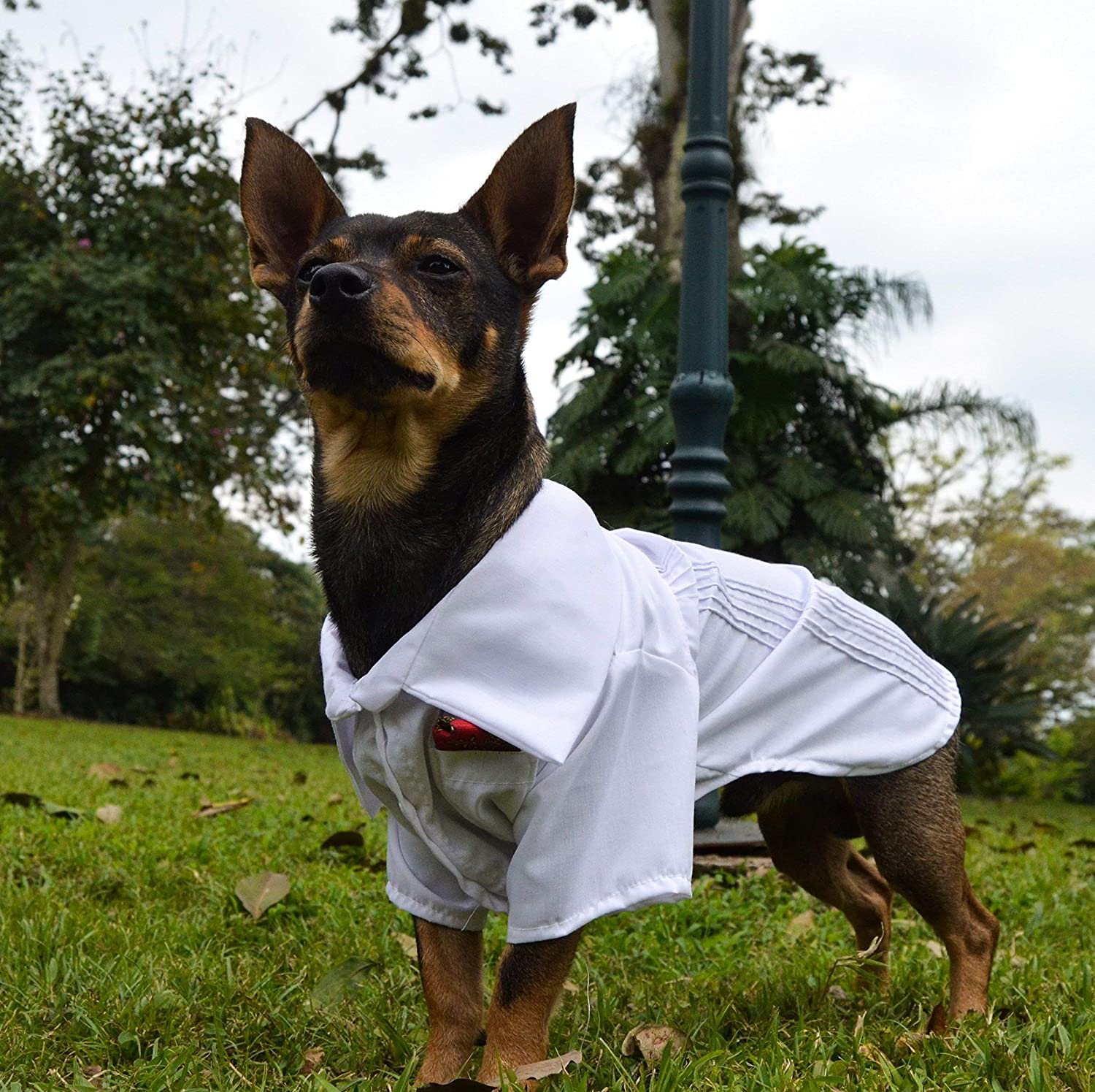 Guayabera jarocho personalized with name embroidered for pet