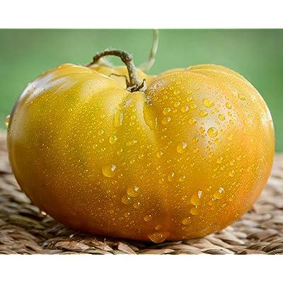 Thorburn's Terra Cotta Terracotta Heirloom Tomato Premium Seed Packet : Garden & Outdoor