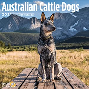 2021 Australian Cattle Dogs Wall Calendar by Bright Day, 12 x 12 Inch, Cute Dog Puppy
