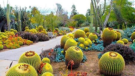 Rompecabezas De 1000 Piezas,Jardín Botánico De Cactus Imagen De Bricolaje De Madera,Decoración Para El Hogar: Amazon.es: Hogar