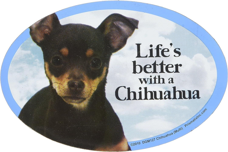 MINIATURE PINSCHER ON BOARD Novelty Car//Van//Window Sticker Ideal for Dog Owners