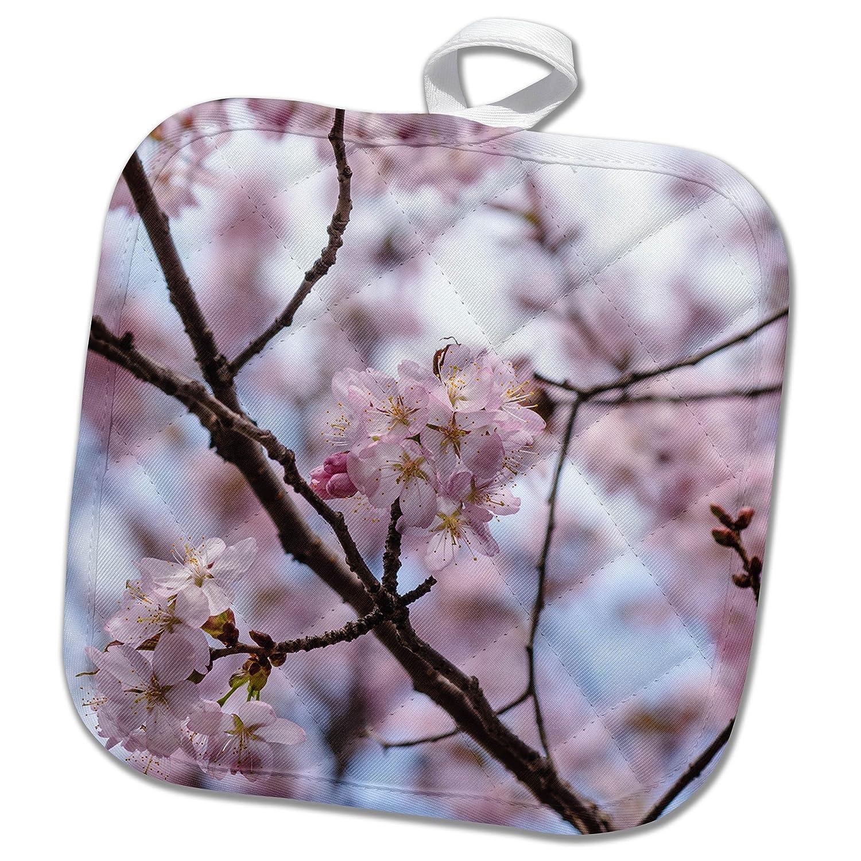 Flowers Sakura Beautiful 3dRose Alexis Photography Detail of Japanese Cherry Blossom Sakura Tree in Full Bloom in Spring 8x8 Potholder PHL/_286579/_1